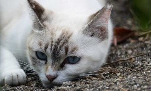 What to do if your cat has sensitive stomach or you need to deworm your cat