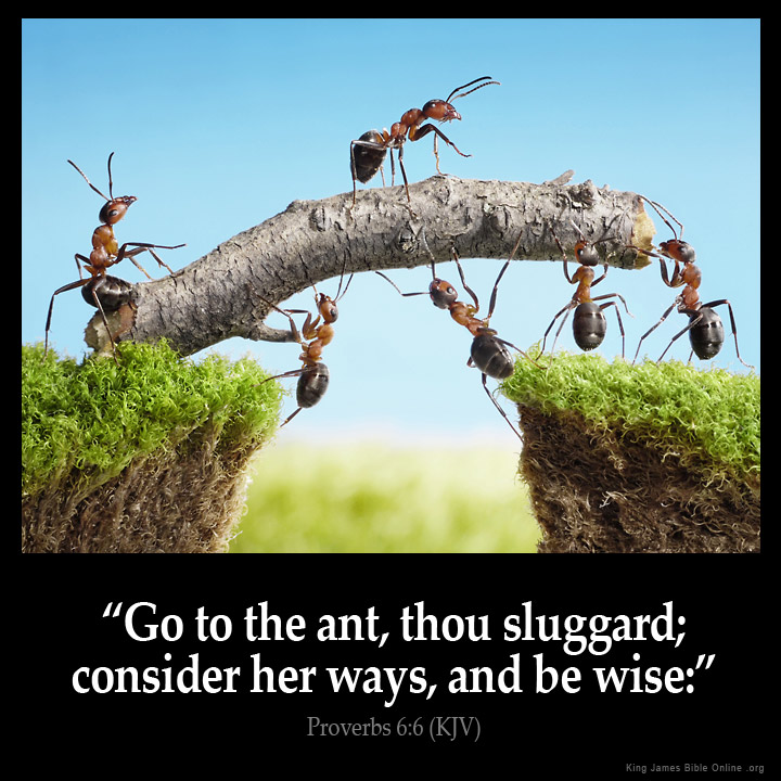 The sluggard and the ants